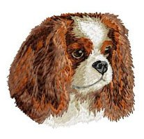 cavalier-king-charles-hundeverein-dj549